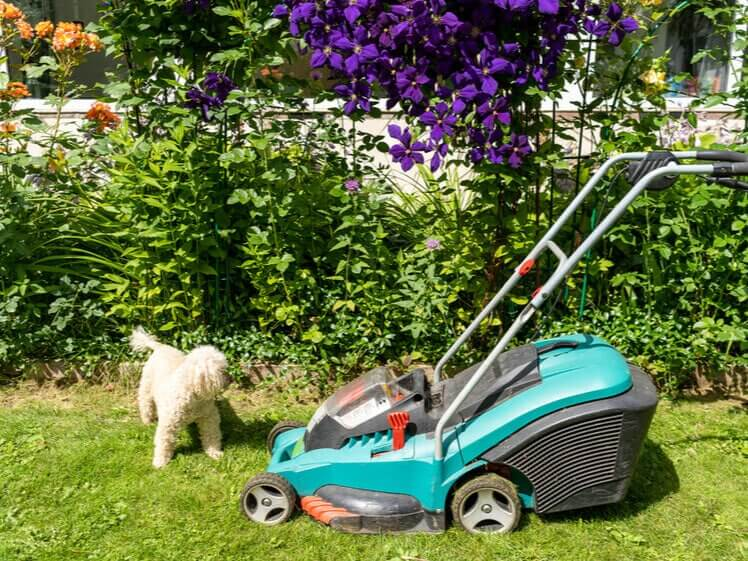 best-cordless-lawn-mower-featured-image