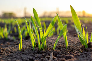 how long it takes for grass to grow from seed