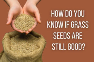 How-do-you-know-if-grass-seeds-are-still-good